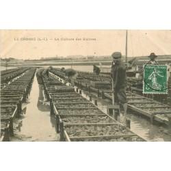 44 LE CROISIC. La Culture des Huîtres dans les Parc 1909