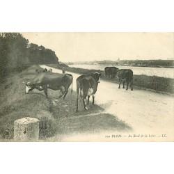 41 BLOIS. Troupeau de Vaches Bord de la Loire 1906