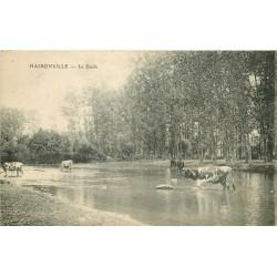 55 HAIRONVILLE. Vaches dans la Saulx 1918