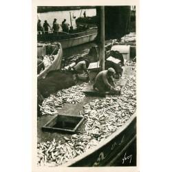 29 DOUARNENEZ. Pêcheurs triant le Poisson sur les bateaux de Pêche