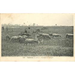 41 SALBRIS. Bergère et ses Moutons avec Chasseurs derrière en Sologne 1906