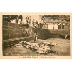 29 CONCARNEAU. Débarquement du Thon par les Pêcheurs au Quai
