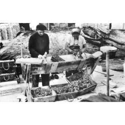 Photo Cpsm 33 ARCACHON. Le Détrocage des Huîtres