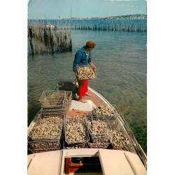 Photo Cpsm 33 ARCACHON. Le reparquage des Huîtres dans le Bassin Ostréicole 1964