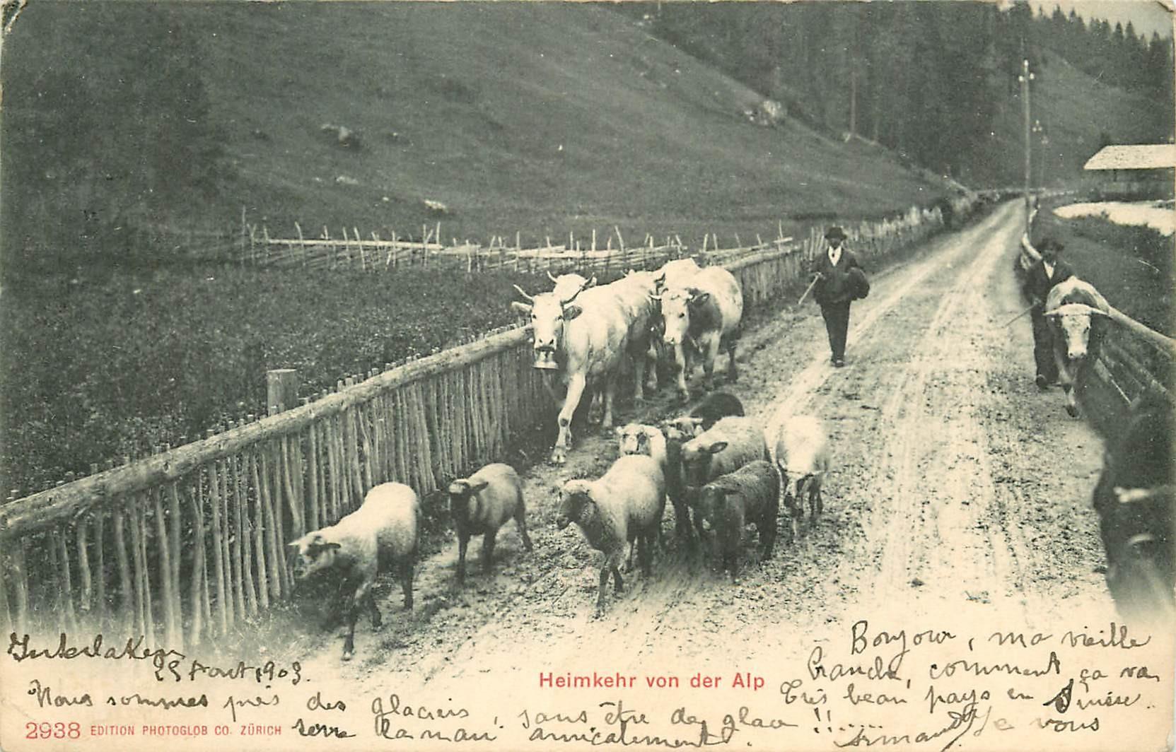 SUISSE. Heimkehr von der Alp 1903