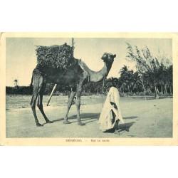 SENEGAL. Chamelier et son Dromadaire sur la Route