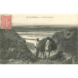 17 ILE D'OLERON. La Récolte du Varech 1907