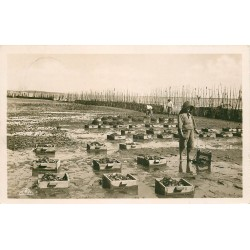 Photo Cpa 33 ARCACHON. LesCollecteurs et la Récolte Parc à Huîtres 1937