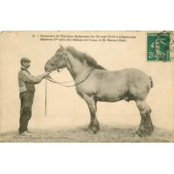 """08 CHARLEVILLE. Concours de Chevaux Ardennais """" Mathieu """" étalon vers 1911"""