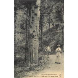 38 ALLEVARD. Un Sapin Géant route Saint-Hugon