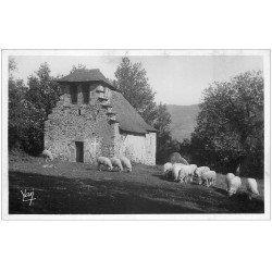 carte postale ancienne 66 ARGELES. Chapelle N.D de Castère et Moutons. Carte photo