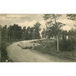 77 BALLOY. Troupeau de Moutons sur le Pont du Canal