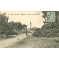 80 CAYEUX-SUR-MER. Le Bois de Sapins et le Phare vers 1906