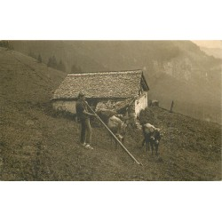SUISSE. Des Senner's Abendlied le Cor des Alpes avec vaches 1920