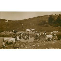 39 Berger au Pâturage du Jura avec Vaches se désaltérant