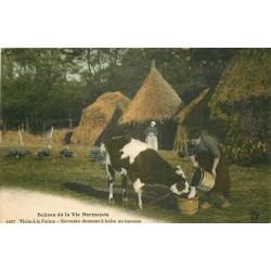 AGRICULTURE. Visite à la Ferme Servante donnant à boire au taureau en Normandie