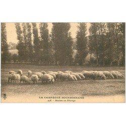 carte postale ancienne 03 BOURBONNAIS. Moutons au Pâturage