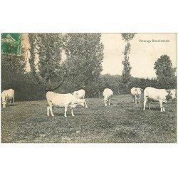 carte postale ancienne 03 BOURBONNAIS. Pâturage et Vaches
