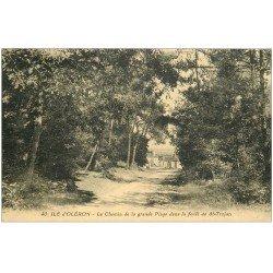 carte postale ancienne 17 ILE D'OLERON. Chemin de la Grande Plage dans Forêt de Saint-Trojan 1931
