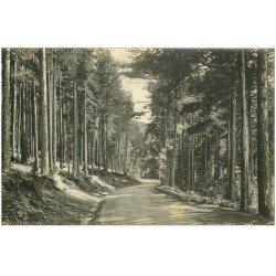 carte postale ancienne 20 CORSE. Vizzavona. La Forêt Route d'Ajaccio. Carte de Luxe LL.
