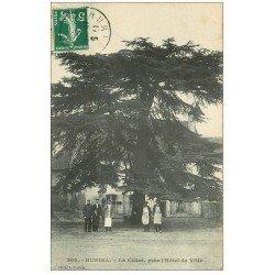 carte postale ancienne 03 HURIEL. Le Cèdre près Hôtel de Ville 1909
